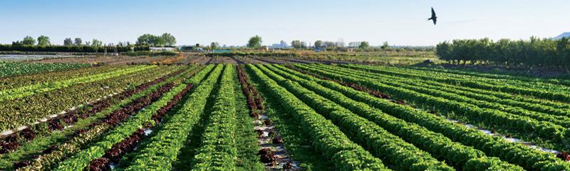 Paisatges agrícoles