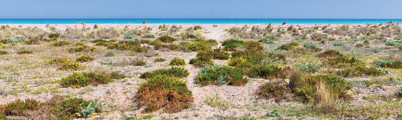 Platges de la marjal d'Almenara